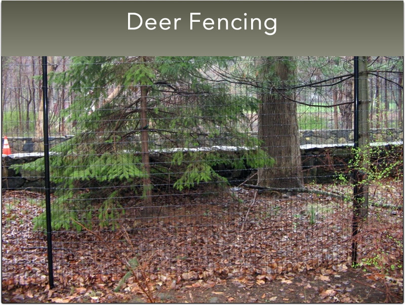 G-Small-Deer-fencing-4
